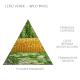 Claus porto soap bar Leao verde-Wild moss 50 gram